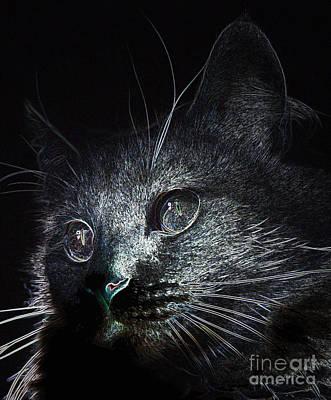 Photograph - Cat Eyes by Denise Oldridge