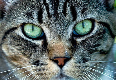 Photograph - Cat Face by Jean Noren