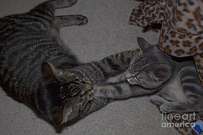 Photograph - Cat-fu Straight Paw by Donna L Munro