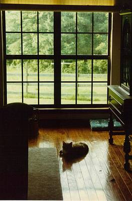 Cat In A Quiet Room Original by Wide Awake Arts