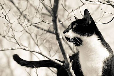 Photograph - Cat In A Tree In Black And White by Lori Coleman