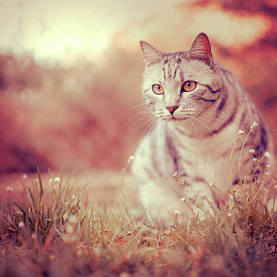 Cat Sunset Photograph - Cat In Grass by Alberto Cassani