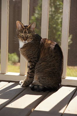 Pet Photograph - Cat In The Sun by Megan Cohen