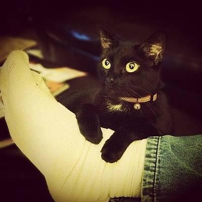 Leather Photograph - #cat #kitty #kitten #black #purr #lazy by Joshua Wilson