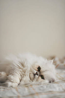 Okayama Prefecture Photograph - Cat Lying In Bed by Nazra Zahri