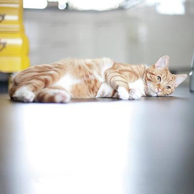 Cat Lying On Floor Art Print