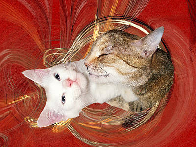 Photograph - Cat Mother Love by Zsuzsa Balla
