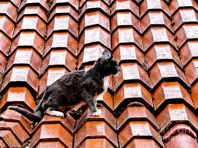 Cat On A Hot Tile Roof Art Print by Al Bourassa