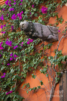Photograph - Cat On A Wall by Craig Lovell