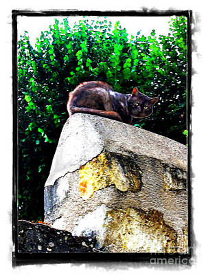 Photograph - Cat On Medieval Wall by Joan  Minchak