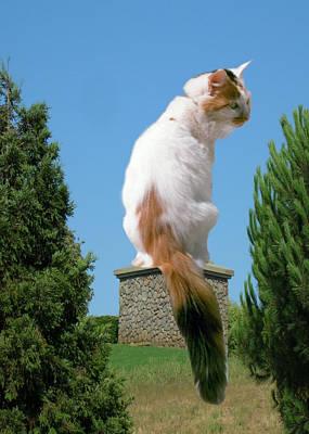 Photograph - Cat On Pedestal by Bonnie Muir