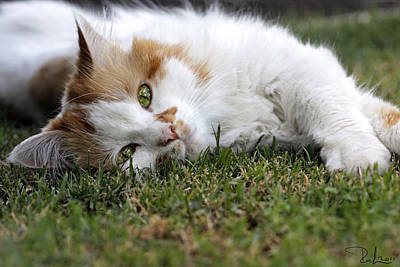 Art Print featuring the photograph Cat On The Grass by Raffaella Lunelli