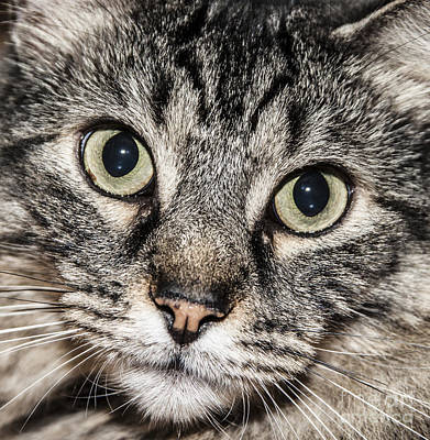 Photograph - Cat Portrait by Jeannette Hunt