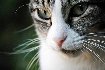 Cat Portrait Art Print by Julia Williams