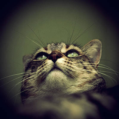 Tabby Photograph - Cat Portrait by Louise LeGresley
