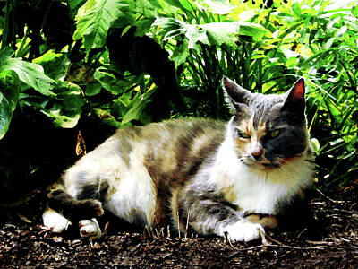 Photograph - Cat Relaxing In Garden by Susan Savad