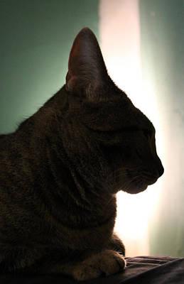 Nina Mirhabibi Photograph - Cat Silhouette by Nina Mirhabibi