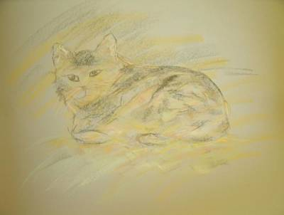 Pastel - Cat Sketch 2 by Samantha L