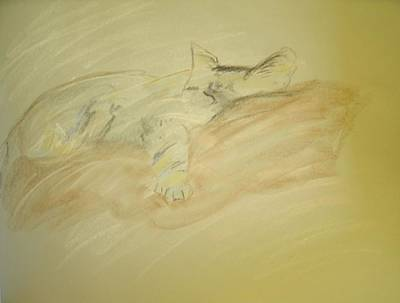 Pastel - Cat Sketch by Samantha L