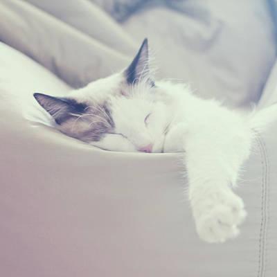 Eyes Closed Photograph - Cat Sleeping by Carmen Moreno Photography