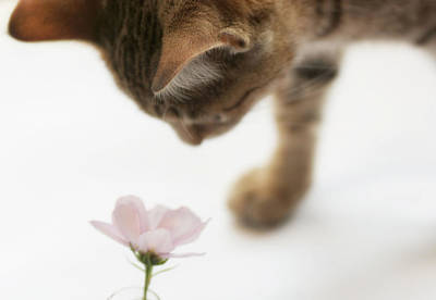 Cat Smelling Flower Art Print by Jill Ferry Photography