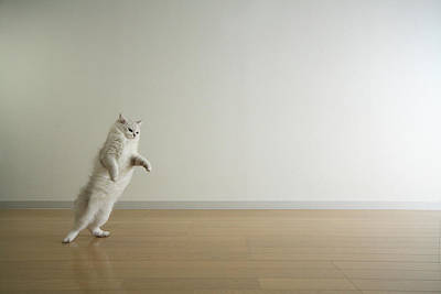 Cat Standing On Hind Legs Art Print by Junku