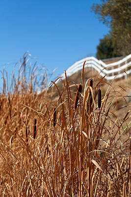 Temecula Photograph - Cat Tails And Galloping Fence by Peter Tellone