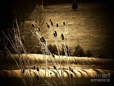 Cat Tails And Hay Rolls Art Print by Joyce Kimble Smith