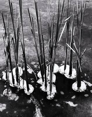Cat-tails In Ice Art Print by Todd Sherlock