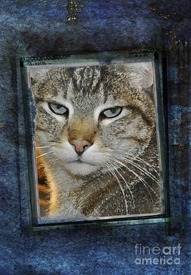 Cat Through A Tiny Window Print by Mary Machare