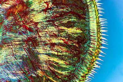 Cat Tongue Tissue, Light Micrograph Art Print by Dr Keith Wheeler