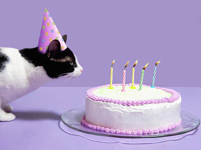Cat Wearing Birthday Hat Blowing Out Candles On Birthday Cake Art Print by Steven Puetzer
