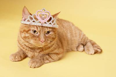 Photograph - Cat Wearing Tiara by BananaStock