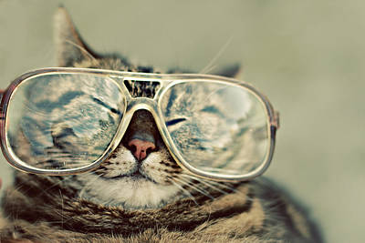 Cat With Glasses Art Print by Sara Miedema