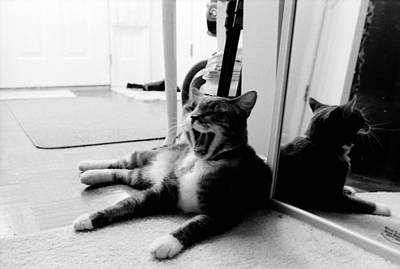 Photograph - Cat Yawn True Bw by Katherine Huck Fernie Howard