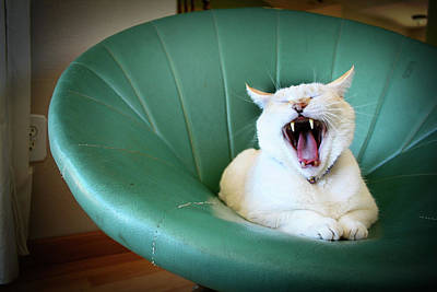 Cat Yawning In A Vintage Blue Green Chair Art Print by Carrie Anne Castillo