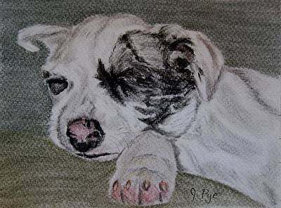 Drawing - Catahoula Pup  by Joan Pye
