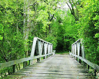 Photograph - Catalpa Plantation Bridge by Lizi Beard-Ward
