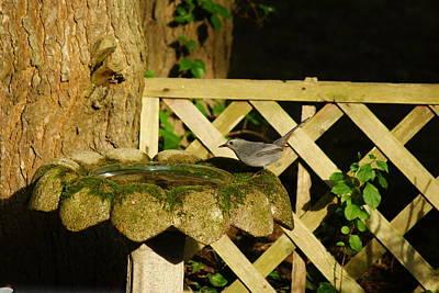 Photograph - Catbird At The Birdbath by Margie Avellino