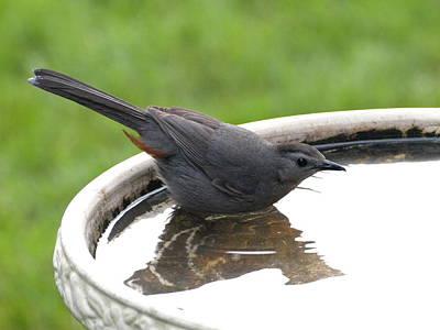 Photograph - Catbird Bath - 1 by Jeffrey Peterson