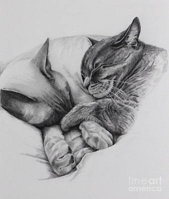 Drawing - Catching Some Shuteye by Margit Sampogna