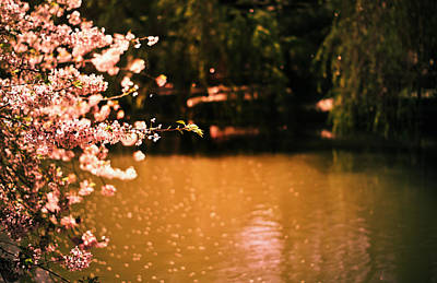 Pond Gardens Photograph - Catching The Light Of Spring by Vivienne Gucwa