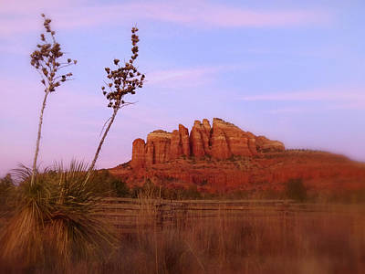 Photograph - Cathedral Rock Sunset by Cindy Wright