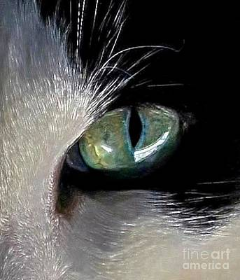 Cat's Eye Art Print by Dale   Ford