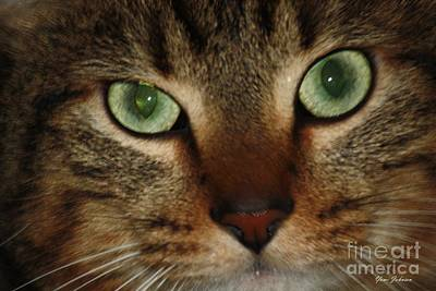 Art Print featuring the photograph Cat's Eye by Yumi Johnson
