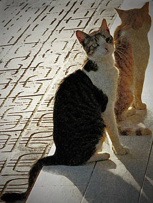 Photograph - Cats by Ian  MacDonald
