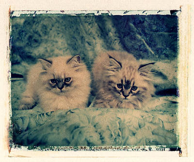 Photograph - Cats by Joe  Palermo