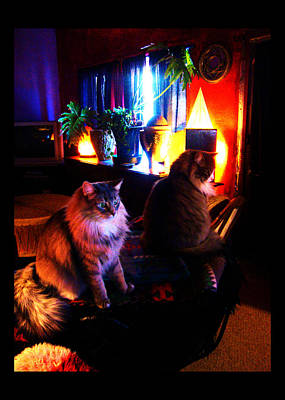 Art Print featuring the photograph Cats On A Drum by Susanne Still