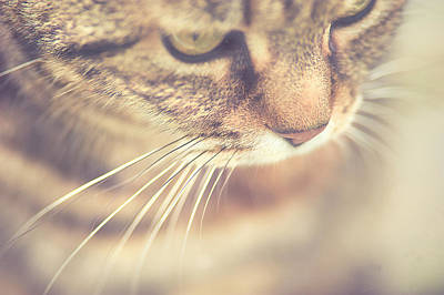 Tabby Photograph - Cat's Whiskers by Ly Wylde Photography