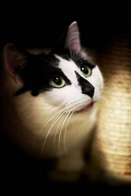 Catsablanca Art Print by JM Photography